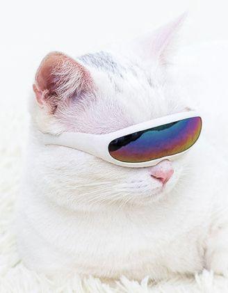 Окуляри вузькі для котика | 248670-01-XX - A-SHOP
