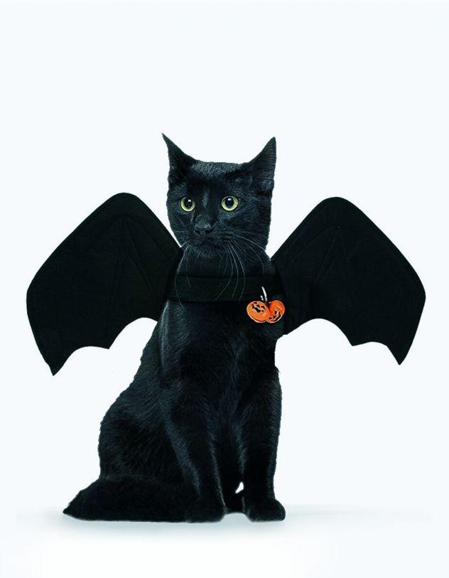 Крила для котика | 248673-02-XX - A-SHOP